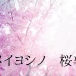 ソメイヨシノ桜事情